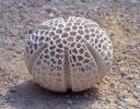Medek, Pollen, sandstone,